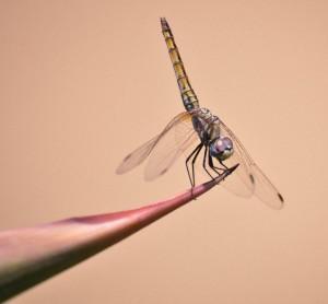 עומדת בפינה / קרואת כנף (צילום הלנה מגר-טלמור)