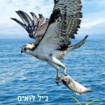 לעוף כמו אייריס מאת ג'יל לואיס / רומן מרגש לילדים ונוער על חברות ואהבה לטבע