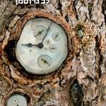 ספרים חדשים – מומלצי השבוע לילדים ולנוער 25/05/15