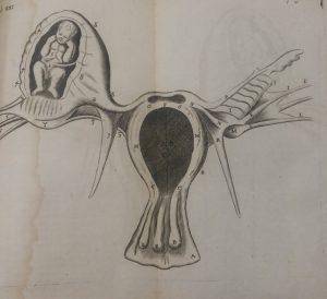 אברי הפוריות - 1745 (הספרייה הלאומית)
